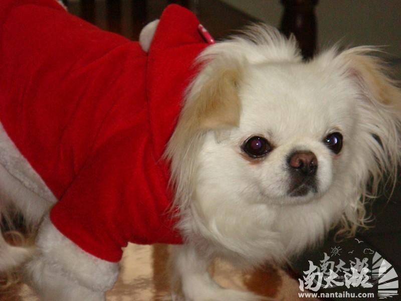 2年3月28日我家狗狗丢失了 求助
