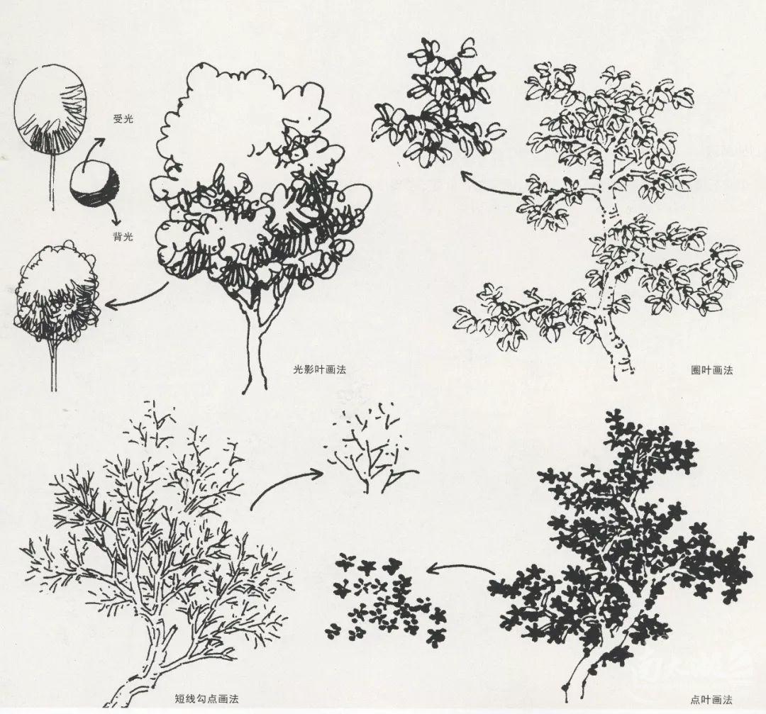 风景速写局部之树木与石头的刻画