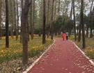 东苕溪绿道