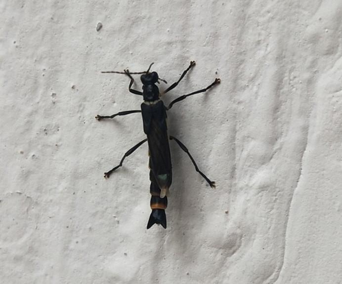 这是什么虫